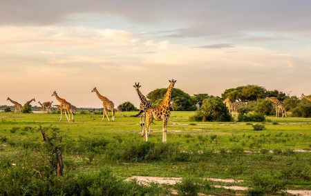 Luxury Murchison Falls Safari