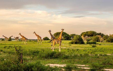 Luxury Murchison Falls Safari