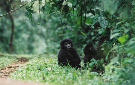 Wildlife Viewing & Primates Holiday
