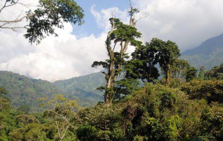 Kibale Forest Camp Uganda