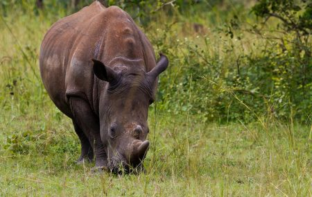 Ziwa Rhino Sanctuary, Walking Tour