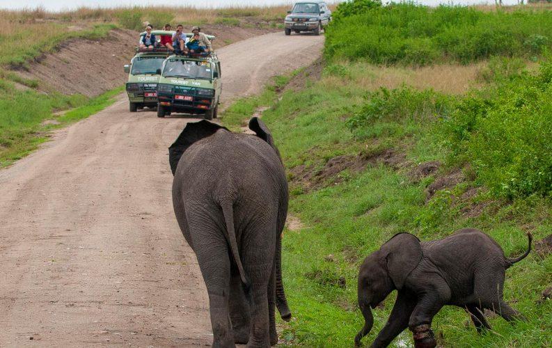 Savannah Wildlife Viewing Game Drives in Uganda
