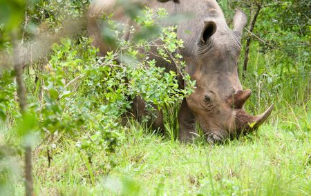 Ziwa Rhino Sanctuary Tour