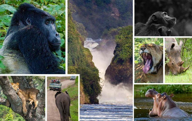 Uganda Wildlife & Gorilla Safari