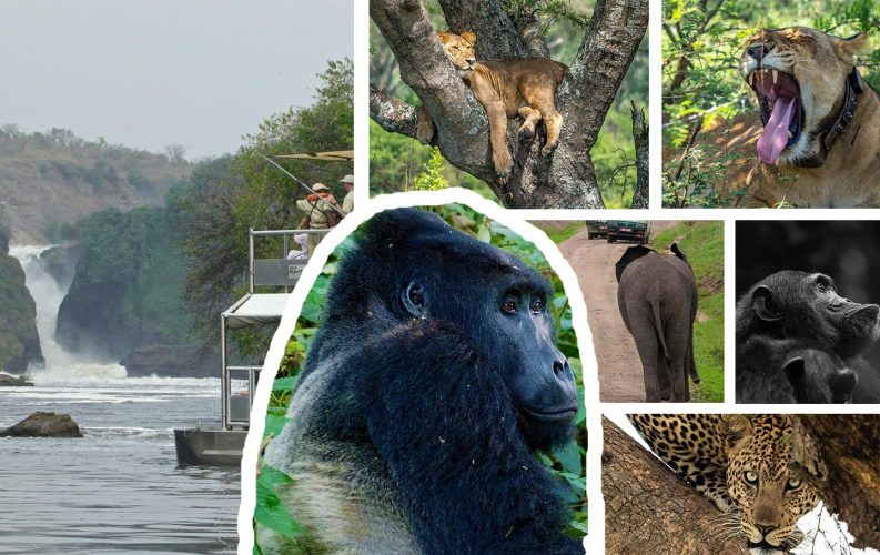Wildlife Viewing & Primates Holiday
