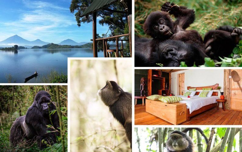Gorilla and Golden Monkey Trekking Safari