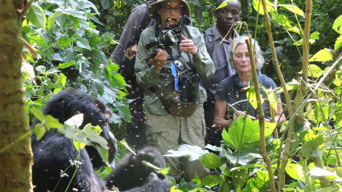 Mountain Gorilla Permits in Uganda and Rwanda