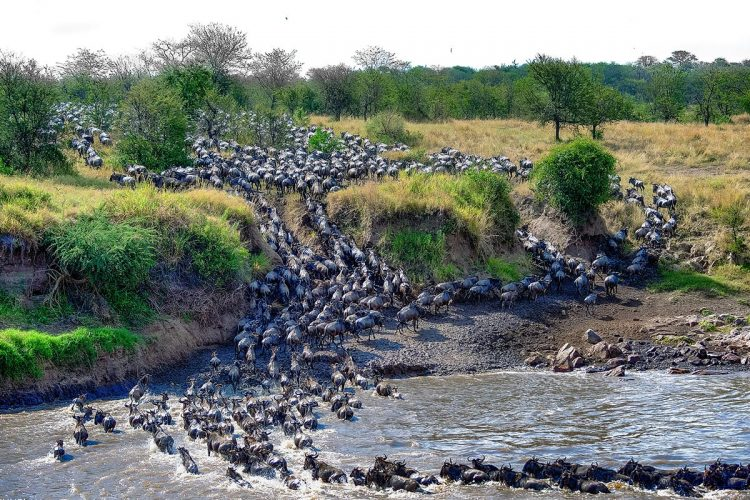 Magical Kenya best time to go on safari